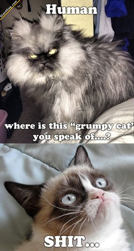 Where Is This Grumpy Cat