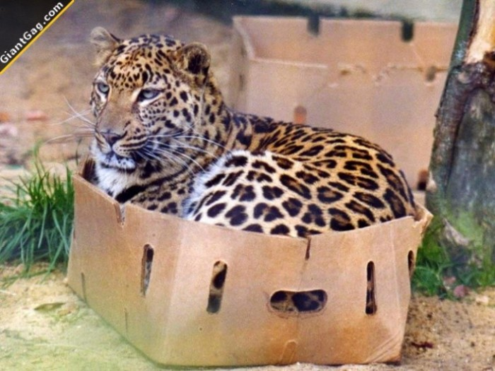 Doesn't Matter The Size Of The Cat, They All Love Boxes