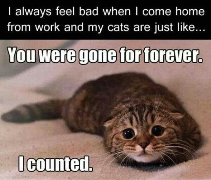 You Were Gone Forever. I Counted