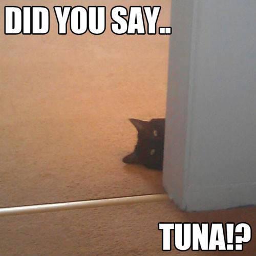 Tuna ?
