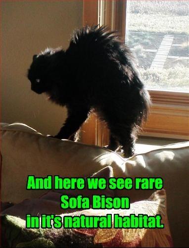 Rare Sofa Bison