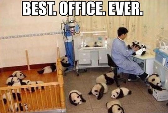 Best Office Ever