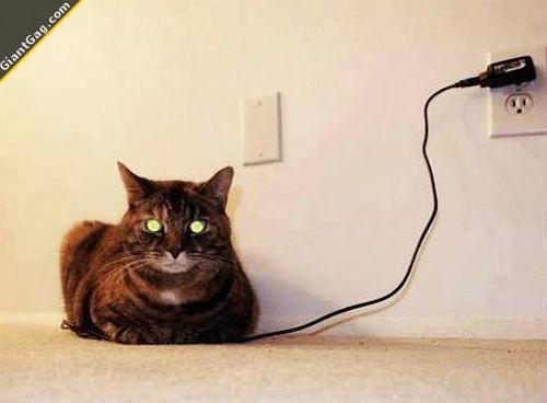 Charging My Cat