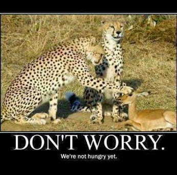 Don't Worry We Are Not Hungry Yet