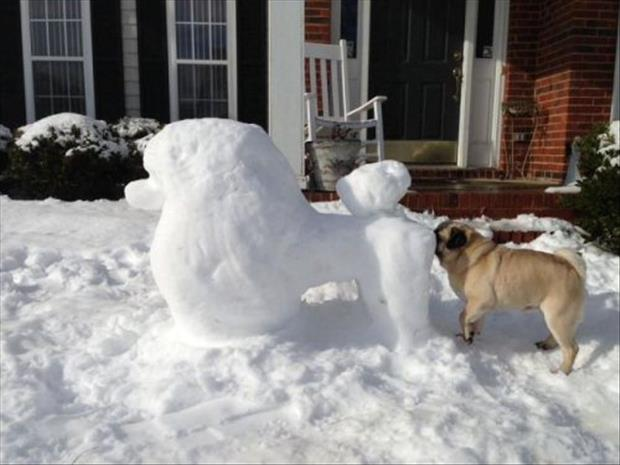 Dog Sniffing Snow Dogs Ass