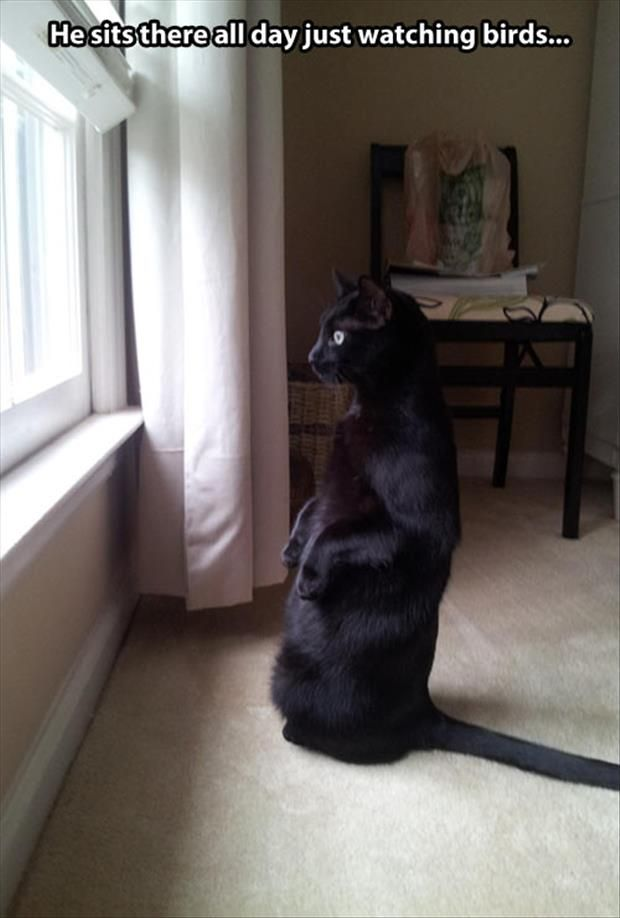 He Sits There All Day Just Watching Birds