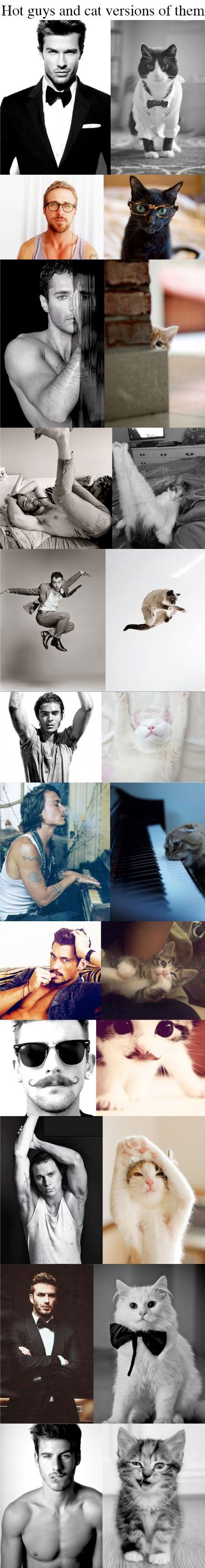 Hot Guys And Cat Version Of Them
