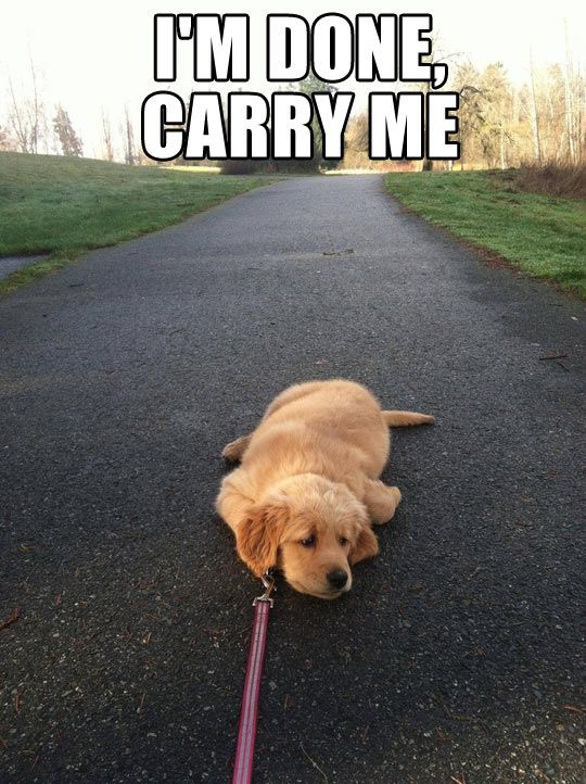 I'm Done, Carry Me