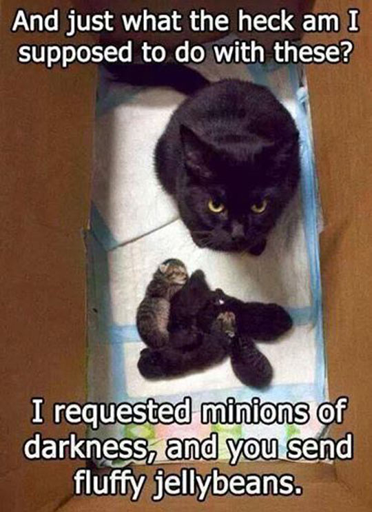 I Requested Minions Of Darkness And You Send Me Fluffy Jellybeans