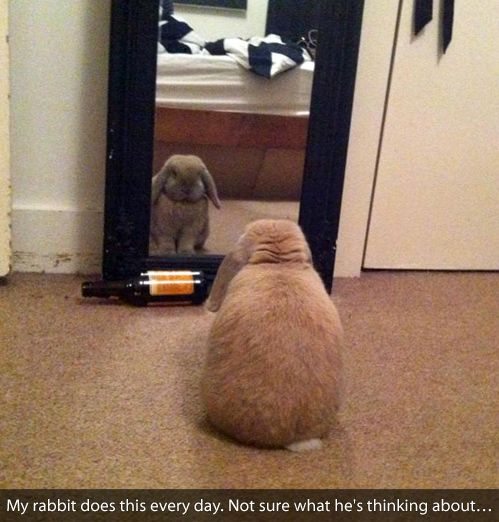 My Rabbit Does This Every Day...
