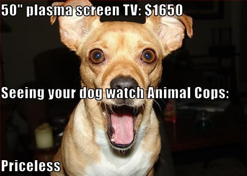 Seeing You Dog Wwatch Animal Cops Is Priceless