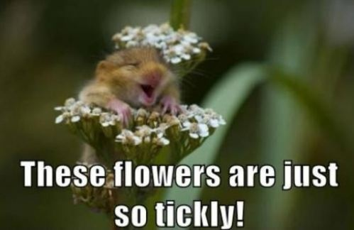 These Flowers Are Just So Tickly