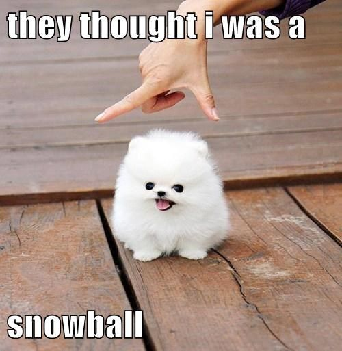 They Thought I Was A Snowball