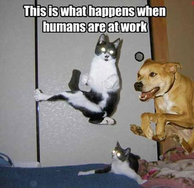 This Is What Happens When Humans Are At Work