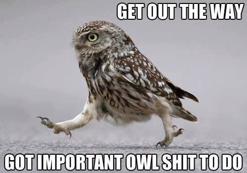Get Out The Way, Got Important Owl Shit To Do