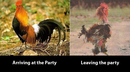 Before And After Party Rooster