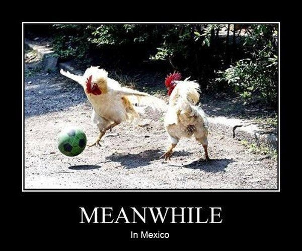 Meanwhile In Mexico, Roosters Are Playing Soccer