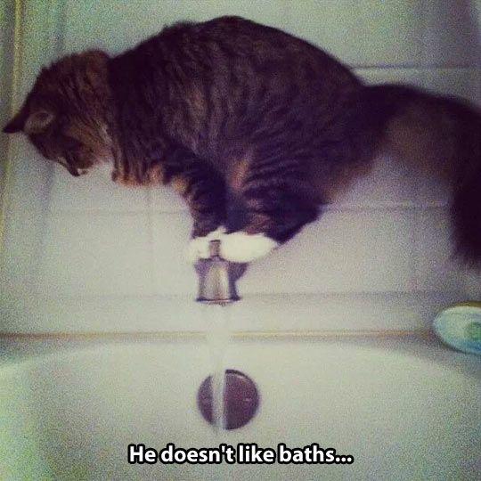 He Doesn't Like Baths ...