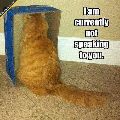 i-am-currently-not-speaking-to-you-cat.j