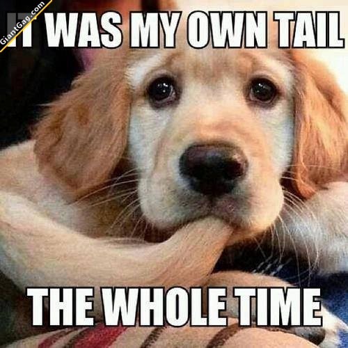 It Was My Tail The Whole Time ?