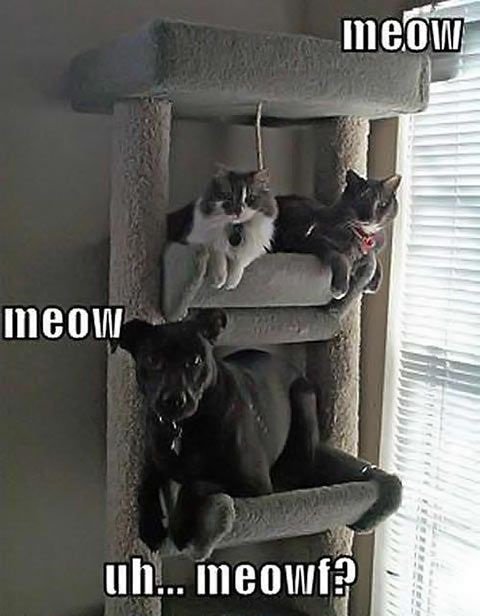 Meow, Meow Uhhh...