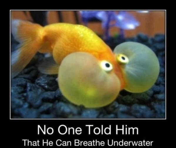 No One Told Him That He Can Breath Underwater