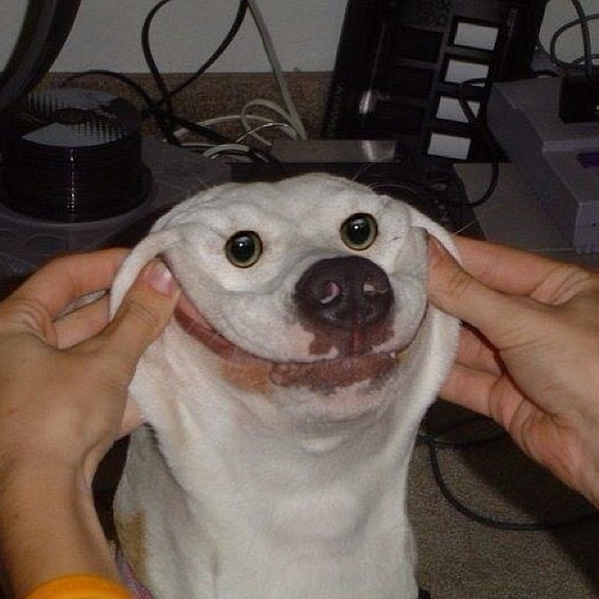 Smiley Dog