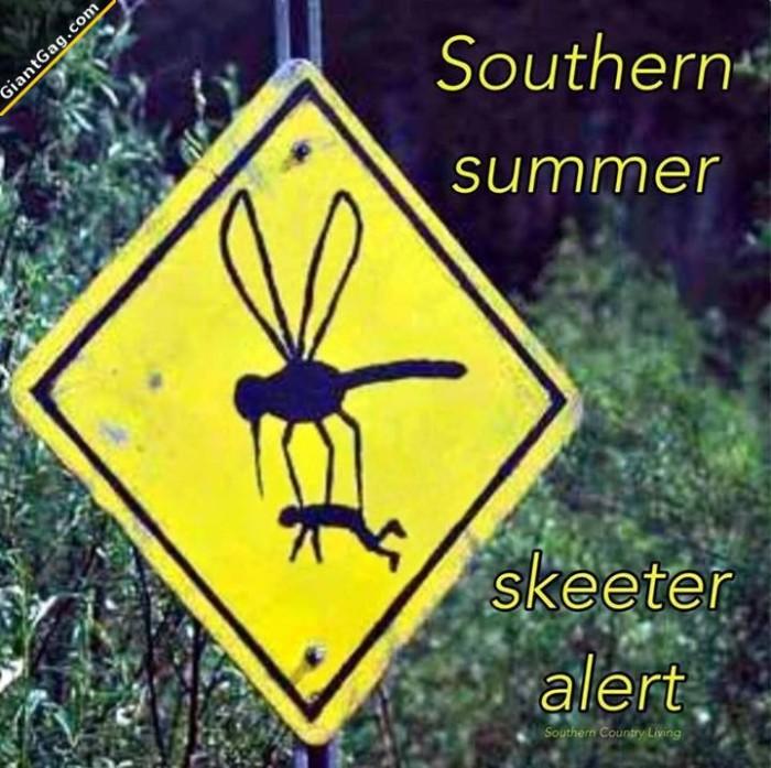 Southern Summer Skeeter Alert