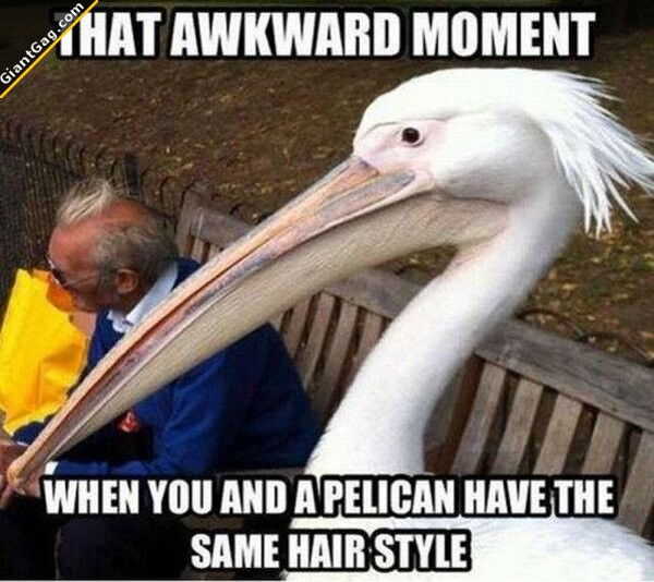 That Awkward Moment When You And A Pellican Have The Same Hair Style