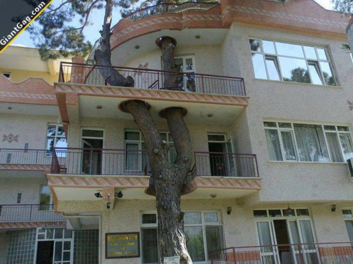 That's What I Call An Tree House