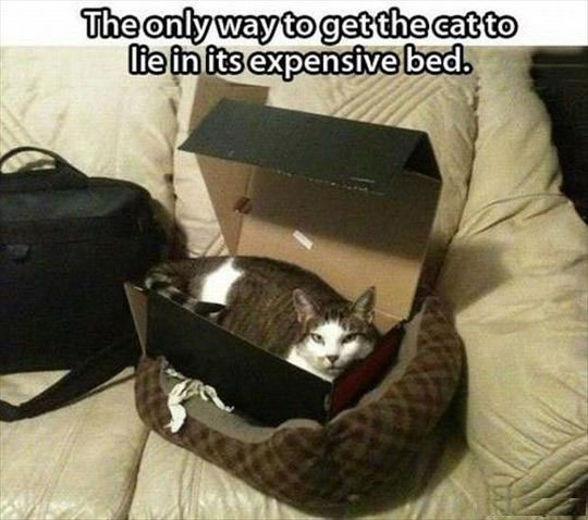 The Only Way To Get A Cat To Lie In His Bed