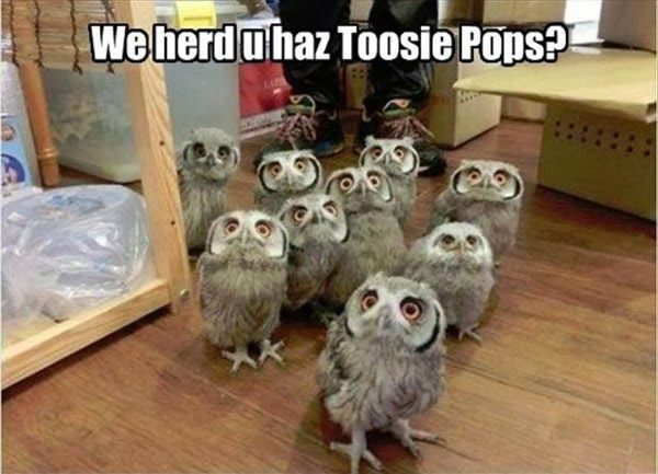 We Hear U Haz Tootsie Pops ?