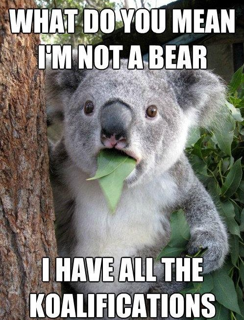 What Do You Mean I'm Not A Bear