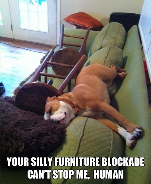 Your Silly Furniture Blockade Can't Stop Me