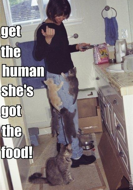 Get The Human She's Got The Food