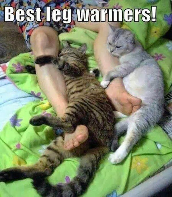 Best Leg Warmers