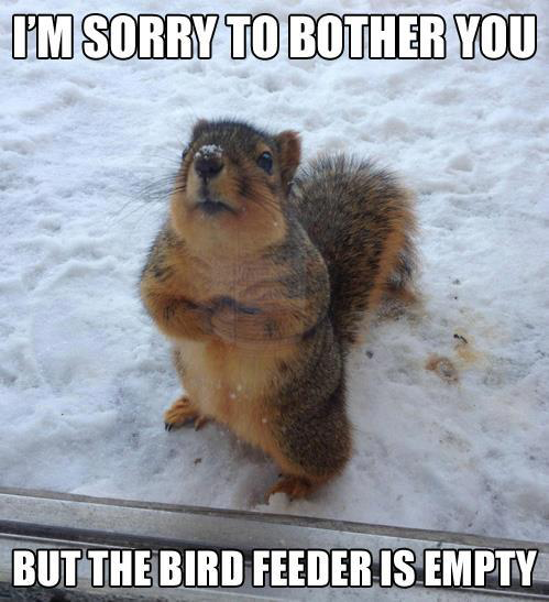 I'm Sorry To Bother You But The Bird Feeder Is Empty