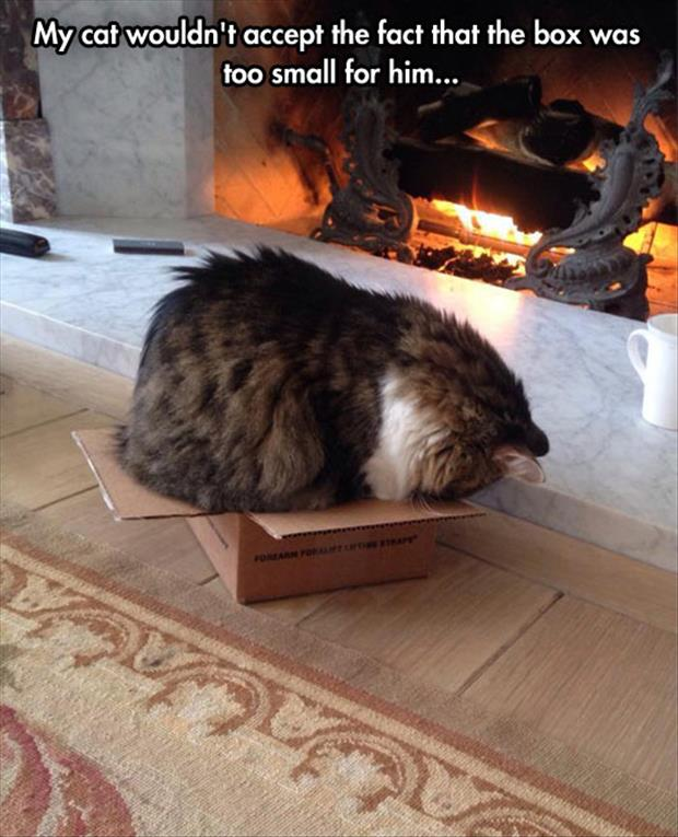 My Cat Wouldn't Accept The Fact That Box Was Too Small For Him