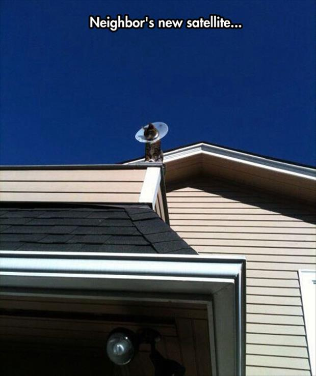 Neighbor's New Satellite