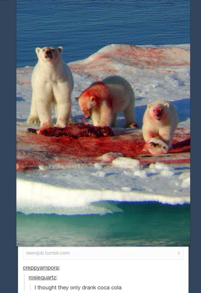 I Thought Polar Bears Only Drink Coca Cola